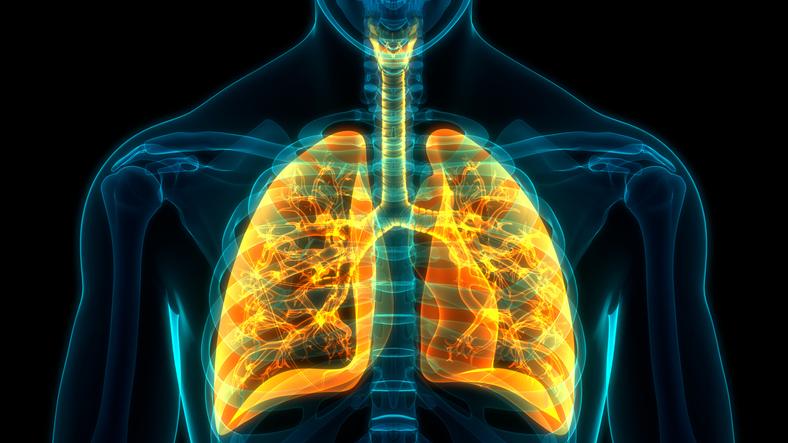 Comment fonctionne le système respiratoire
